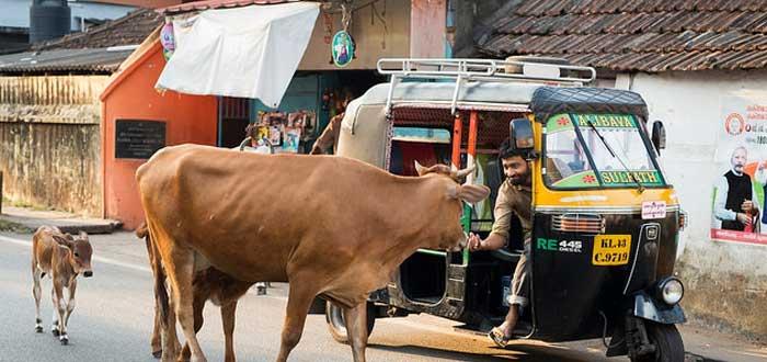 25 Curiosidades de India, un país enigmático, comida de la India, Costumbres de la India, vaca sagrada, idioma de la India