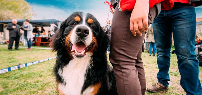 curiosidades de europa, curiosidades de Suiza, impuestos por tener perro