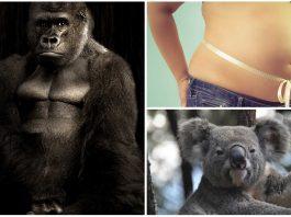 ¿Los animales mamíferos tienen ombligo? ¡Descúbrelo!