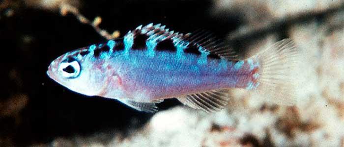 pez que cambia de genero