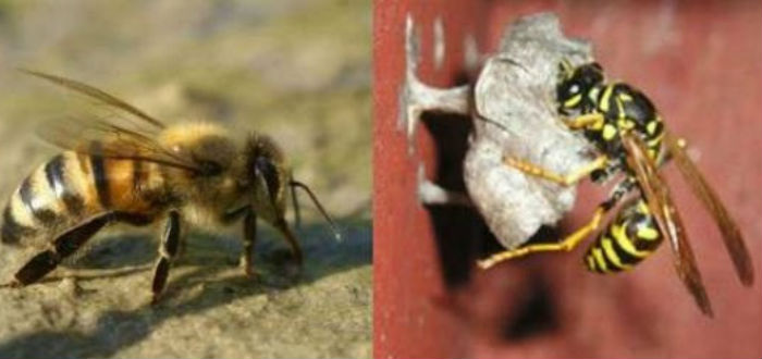 tipos de abejas