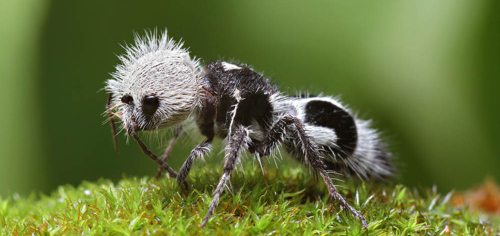 Insectos que parecen extraterrestres