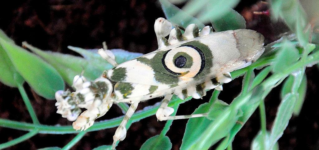 Insectos raros que parecen extraterrestres