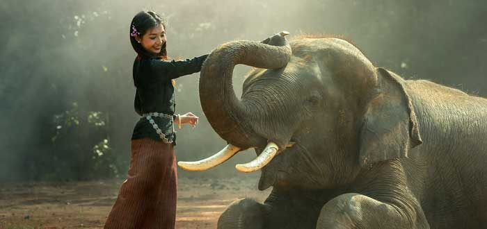 30 Curiosidades de Tailandia, el antiguo y enigmático reino de Siam, Elefantes tailandia, mujeres jirafa