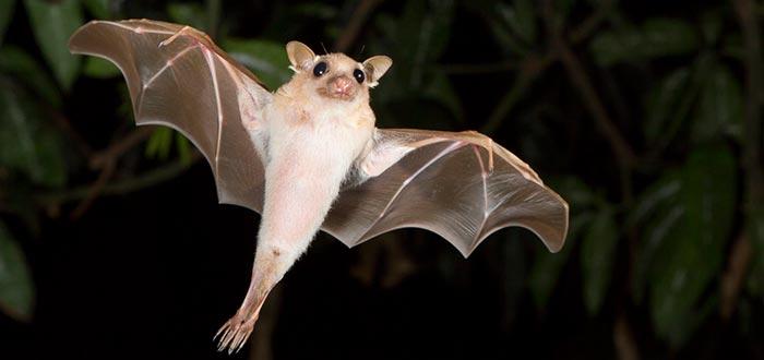 Curiosidades de China, murciélago