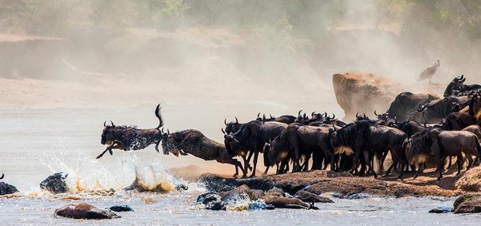 Curiosidades de Kenia, migraciones
