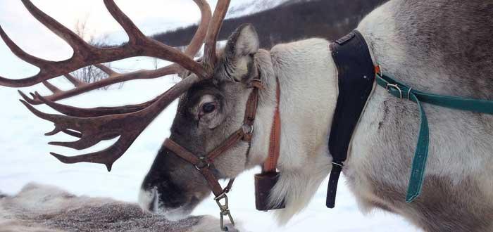50 Curiosidades de Noruega, el sorprendente país vikingo | Con imágenes