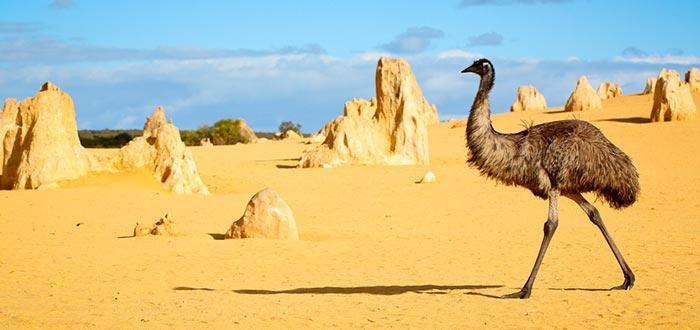 curiosidades de Oceanía, emú
