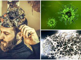 ¿Pudo un virus poner en marcha la conciencia y hacernos humanos?