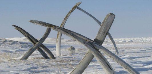 callejon de las ballenas