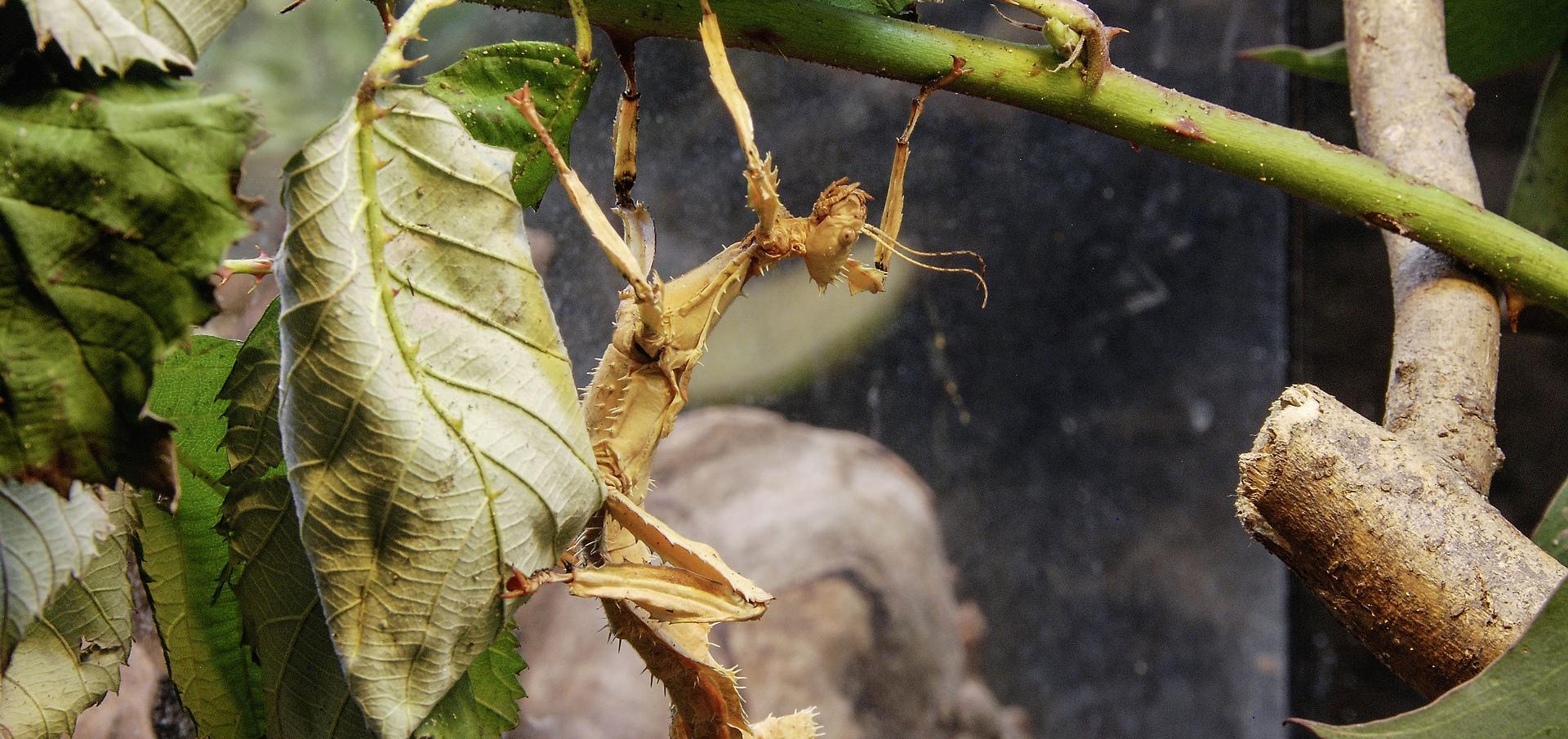 10 insectos raros que parecen extraterrestres