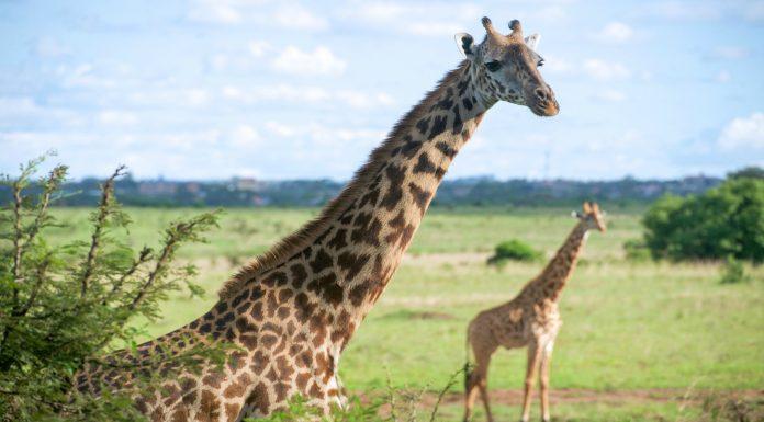 curiosidades de Kenia
