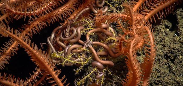 profundidades del golfo de méxico