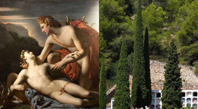 ¿Por qué hay cipreses en los cementerios? El mito de Apolo y Cipariso