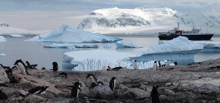 25 Curiosidades de la Antártida | El continente helado, animales que viven en la Antártida