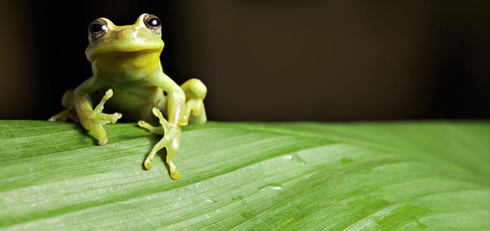 Datos curiosos de Brasil, biodiversidad