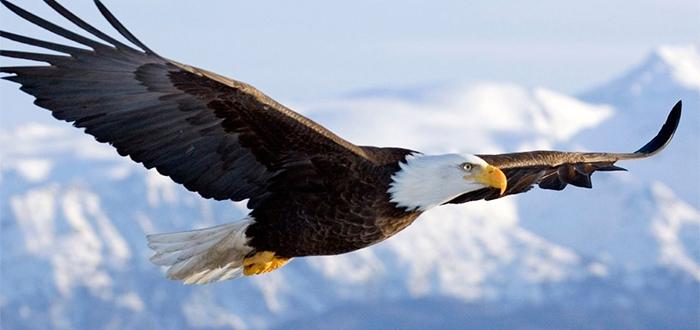 Animales más bonitos del mundo, águila