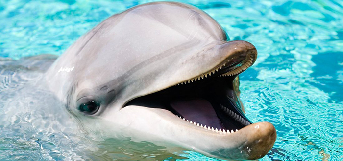 Animales más bonitos del mundo, delfín