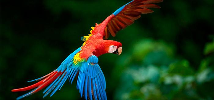Animales más bonitos del mundo, guacamayo