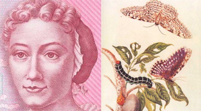 Maria Sibylla Merian | Una de las primeras naturalistas de la historia