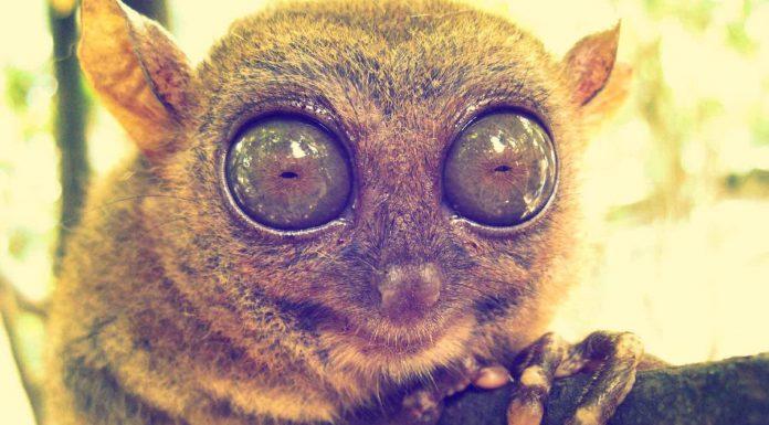 Los 10 animales más curiosos del planeta, animales curiosos, con imágenes