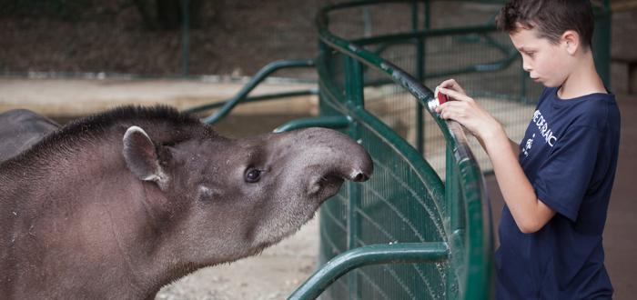 Hipótesis del zoológico