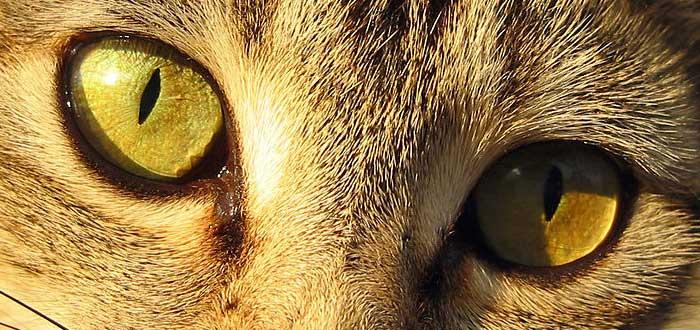 10 Impresionantes ojos de animales | [Con imágenes]