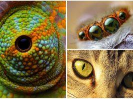 10 Impresionantes ojos de animales   [Con imágenes]