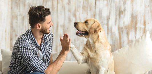 sonrisa a tu perro