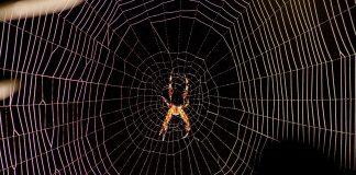 ¿Matar o no a las arañas de tu casa? | Existe una excepción