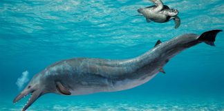 Antepasado de la ballena