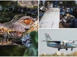 El cocodrilo que se escapó en un avión y provocó 19 muertos