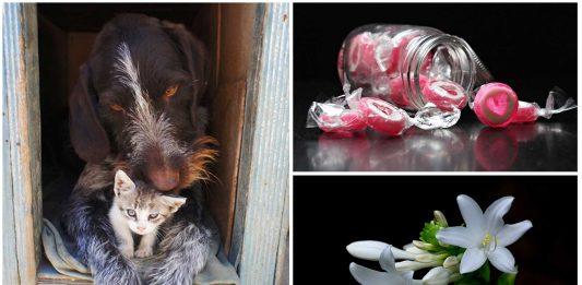 7 Cosas que tienes en casa y pueden dañar a tus mascotas