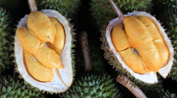 fruto del durián