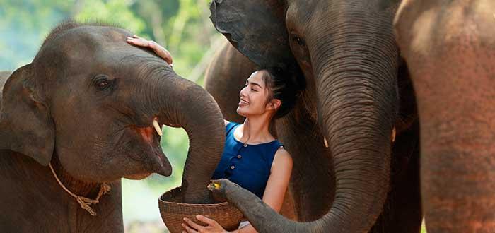 Planes para Tailandia 4