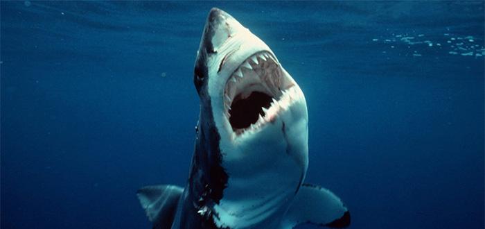 los animales más peligrosos del mar