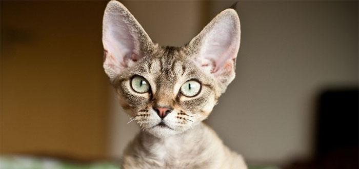 mini gatos