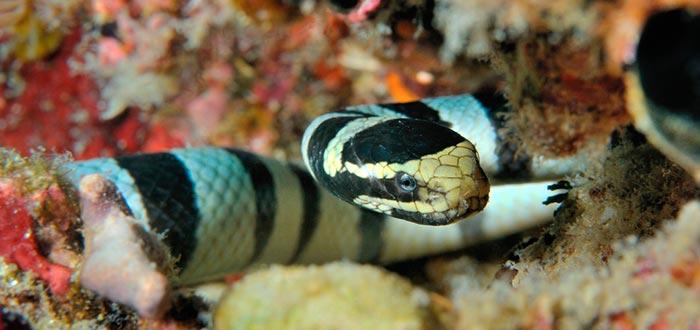 los animales más peligrosos del mar, serpiente de mar