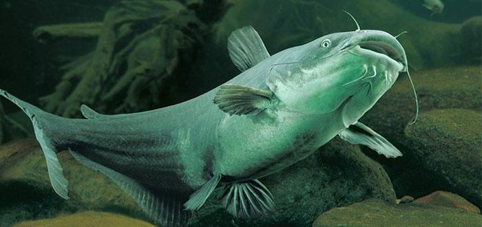 7 Peces que cazan animales NO marinos | Criaturas terrestres... ¡temblad!