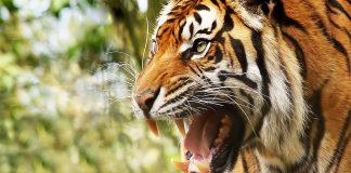 animales agresivos