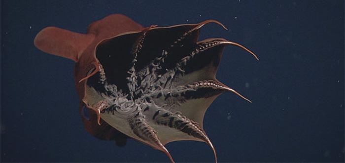 animales marinos raros