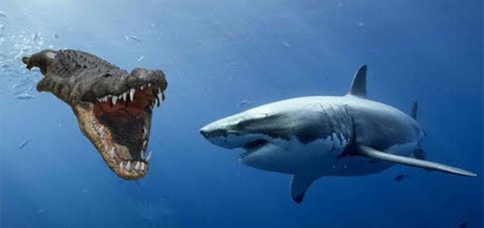 cocodrilo vs tiburón