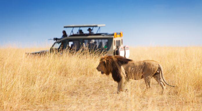 coche en un safari