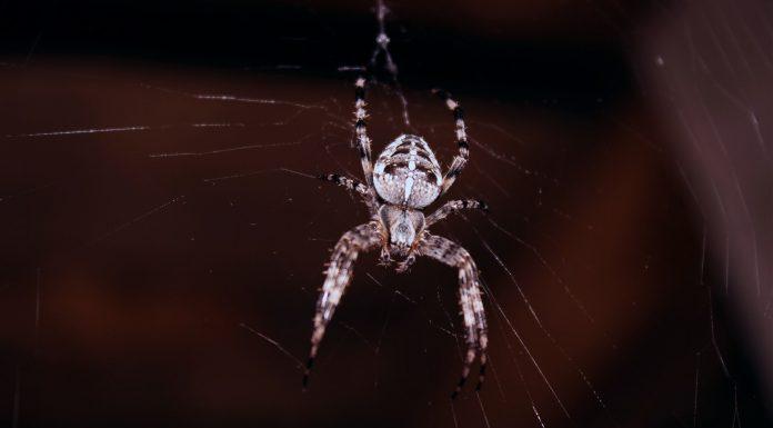 La hora exacta en la que es más usual encontrar arañas | ¡Descúbrela!