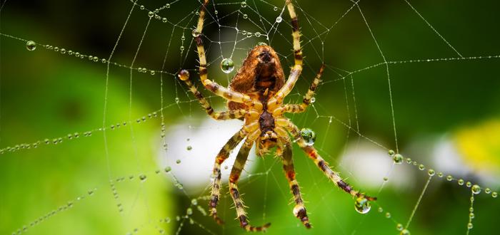 encontrar arañas