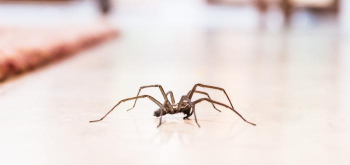 encontrar arañas, hora