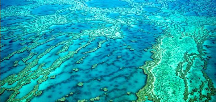 datos curiosos de australia la gran barrera de coral