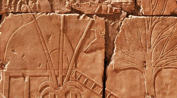 La misteriosa Tierra de Punt a la que viajaron los Egipcios | ¿Dónde está?