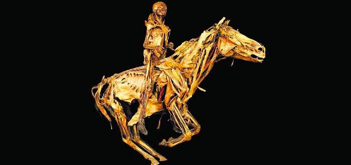 preservado restos humanos, Honoré Fragonard
