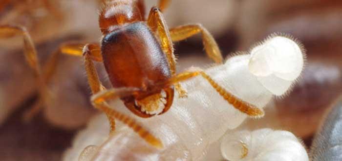 3 Hechos espeluznantes sobre las hormigas | ¡Impactantes!
